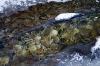Visne blade på bunden af et frosset vandløb