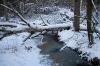 Et frosset vandløb i skoven